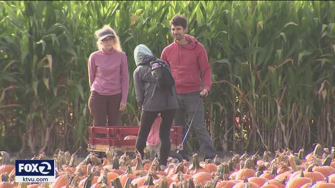 Pumpkin patches in Half Moon Bay feeling drought's impact