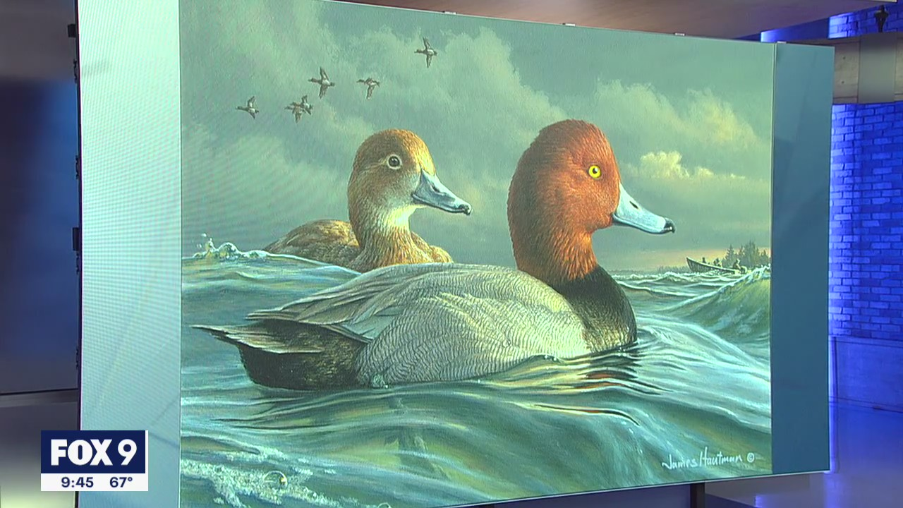 Minnesota man wins Federal Duck Stamp Art Contest for 6th time