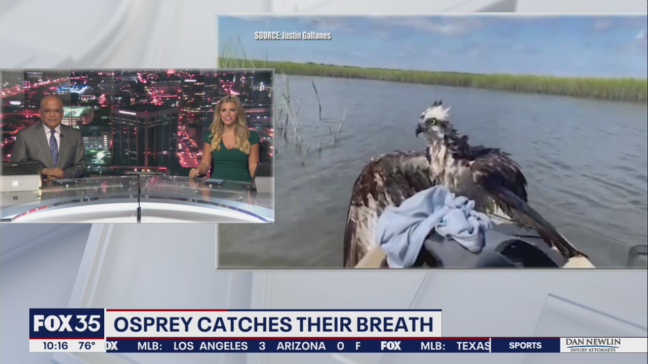 FOX 35 viewer sends video of osprey catching its breath on their boat