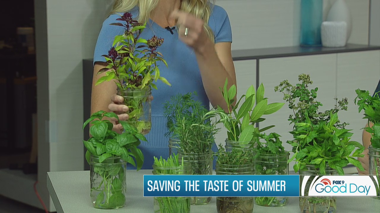 Saving the tastes of summer - how to freeze and dry herbs