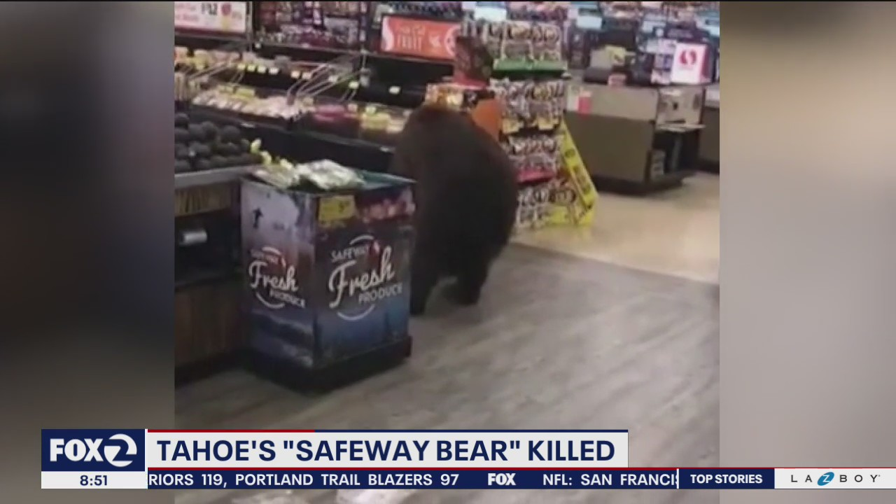 Tahoe bear who wandered through Safeway store shot and killed