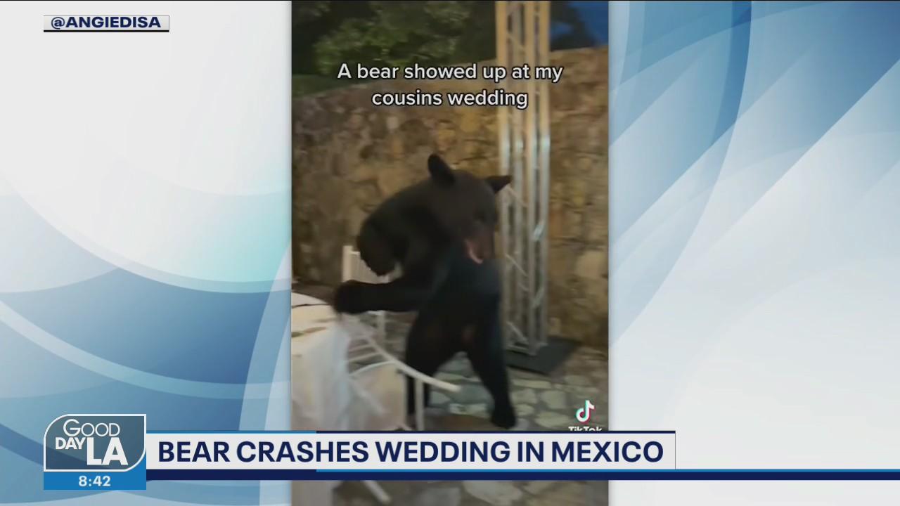 Bear crashes wedding in Mexico